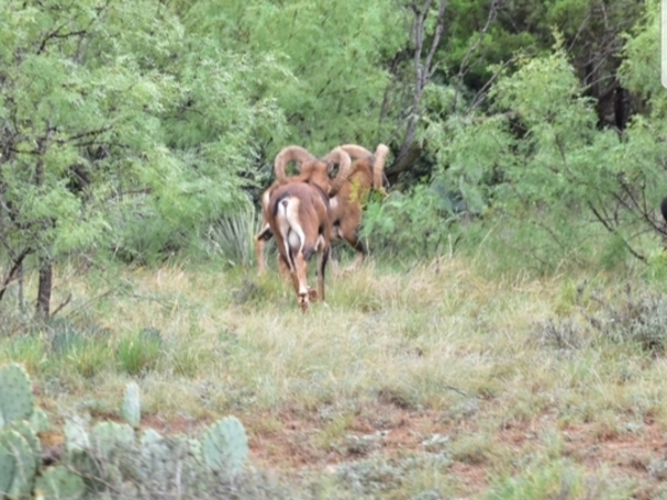 Ranch Enterprises Ltd  specializes in ranch land and ranches